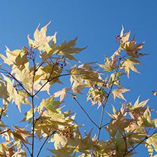 Herbst in Ittenbach
